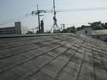 屋根全体に苔