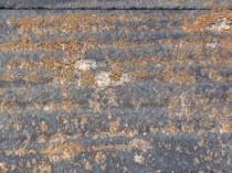 北面スレート 苔・藻発生