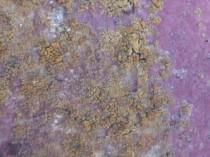 南 苔・藻