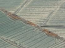 ドーマ端部西側苔藻