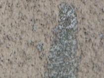 東 外壁 種類の違う苔