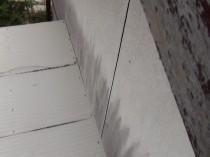 北外壁黒カビ