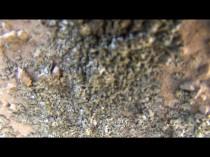 東 外壁 苔・藻