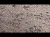 東 外壁 塗膜剥離