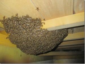 佐々木様 蜂2