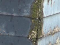 ポーチ屋根苔