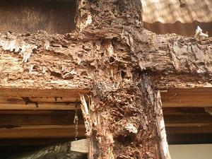 白蟻の蟻道