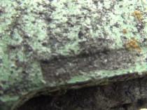 苔・藻発生