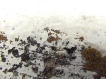 北 外壁 苔・藻