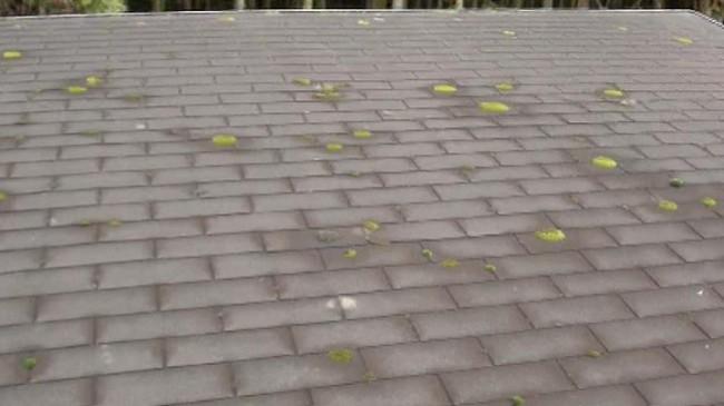 アスファルトシングルの屋根について