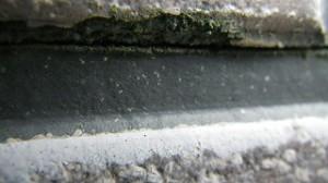 外壁の苔や藻について