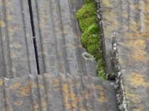 南下屋 種類の違う苔